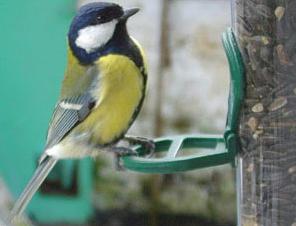 Nourrir les oiseaux en hiver : d'autres informations