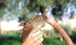 Vous avez trouvé un oiseau bagué en France : que faire ?