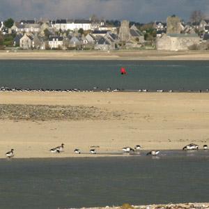 Observer les oiseaux dans les havres du Cotentin