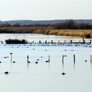 Observer les oiseaux dans le domaine de Certes (Gironde)