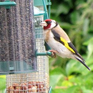 Quand faut-il arrêter de nourrir les oiseaux : en mars ou en avril ?
