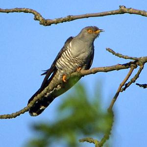 Pourquoi et comment les oiseaux migrent-ils  ?
