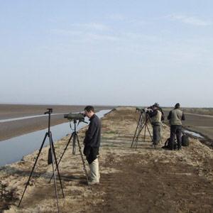Voyage ornithologique à Beidaihe et sur Happy Island (Chine) du 5 au 15 mai 2007