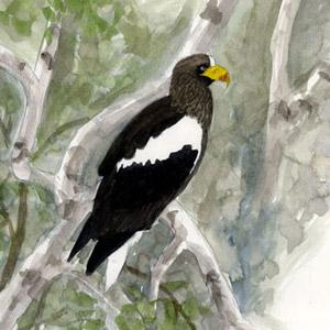 Voyage ornithologique au Kamtchatka en juin-juillet 2006 : deuxième partie
