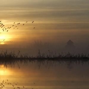 Les oiseaux de l'Espace Naturel Sensible des Ponts d'Ouve