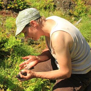 Ingrid Pollet et les déplacements alimentaires des Océanites cul-blanc