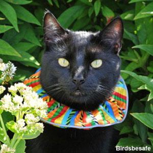 Un collier pour les chats serait efficace pour réduire le nombre d'oiseaux tués