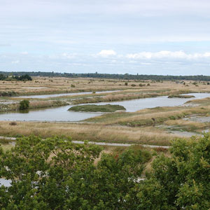 Découvrir les oiseaux de l'île d'Oléron (Charente-Maritime)