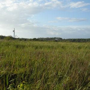 Le marais de Moïsan (Landes) et sa station de baguage