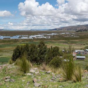 Observer les oiseaux du lac Titicaca (Bolivie-Pérou)