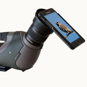Photographier les oiseaux avec un smartphone : réglages manuels et conseils
