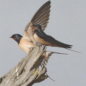 Patrick Fichter nous parle de son livre «Oiseaux migrateurs, secrets de grands voyages»