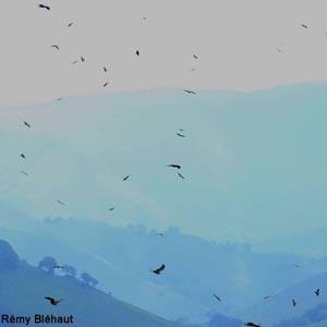 Tendances intéressantes de la migration au-dessus des Pyrénées et du détroit de Gibraltar