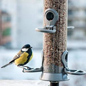 Faut-il donner des graines «bio» aux oiseaux ?