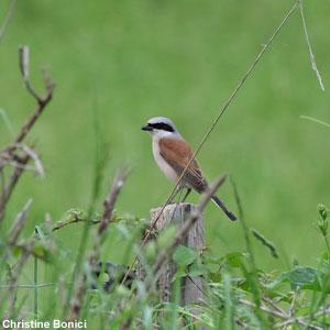 Les oiseaux qui ont échappé au projet d'aéroport de Notre-Dame-des-Landes