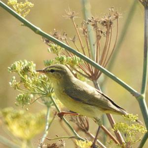 Semez ou laissez pousser des fleurs qui produisent des graines pour les oiseaux
