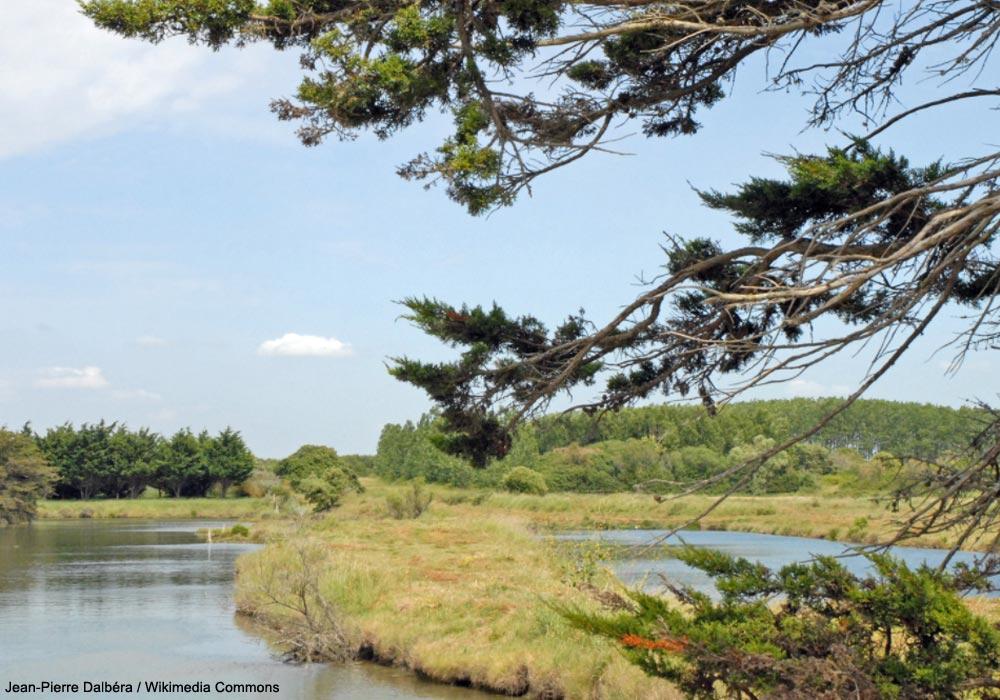Sortie ornithologique guidée dans les marais d'Olonne (Vendée) | Ornithomedia.com
