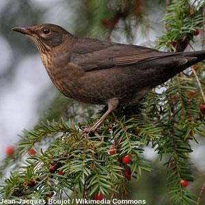 Aménager son jardin pour les oiseaux
