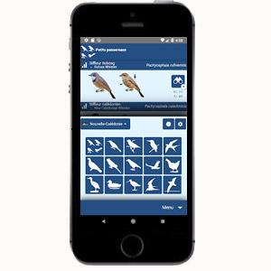 Applications pour smartphones pour l'identification des oiseaux – Seconde partie