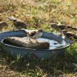 Fournir de l'eau aux oiseaux toute l'année