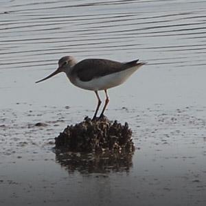 L'observation des oiseaux migrateurs à Gruissan (Aude)
