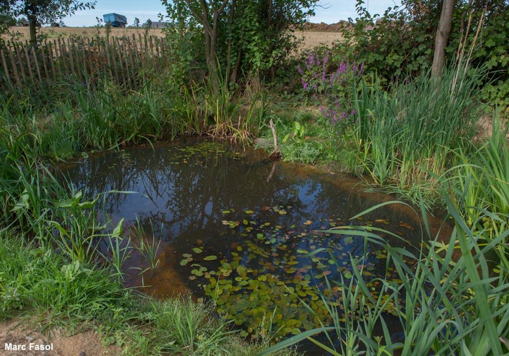 Créer une mare favorable aux oiseaux dans son jardin | Ornithomedia.com