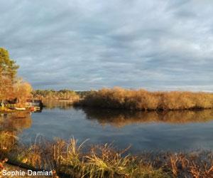 Héronnière du lac d'Aureilhan