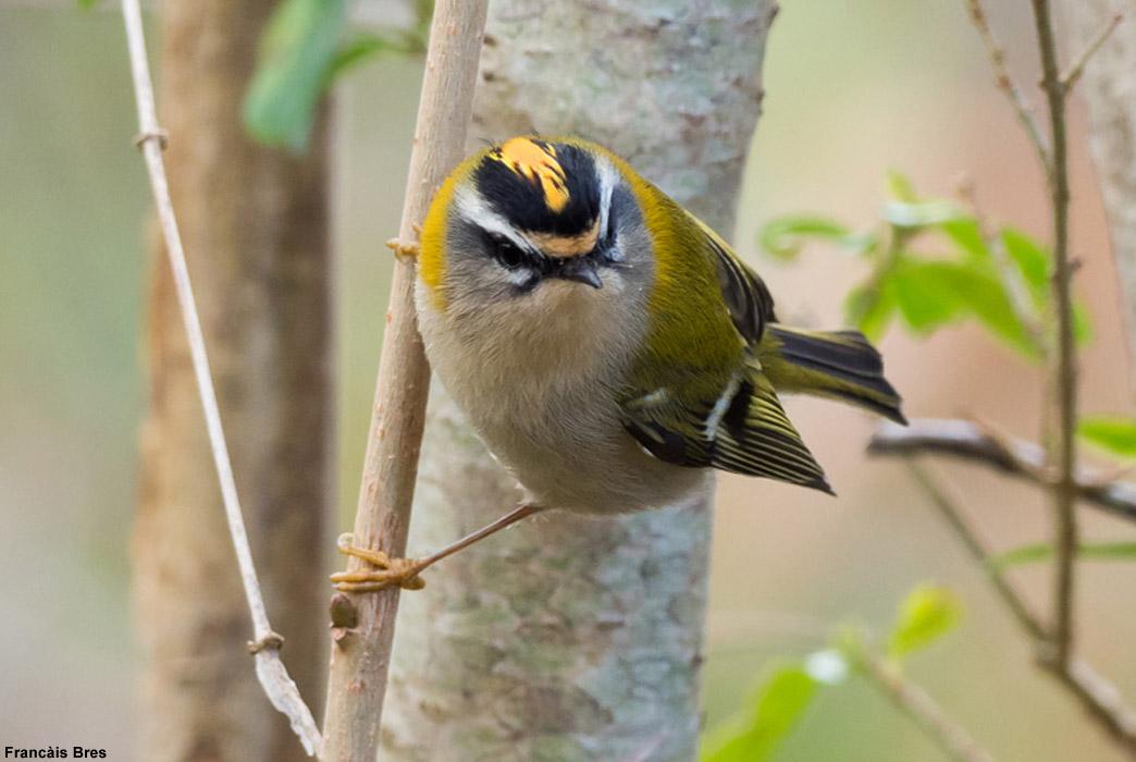 Identifier Les Oiseaux Des Jardins Et Des Villes D Europe En Hiver Ornithomedia Com